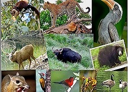 Dajipur Wildlife Sanctuary