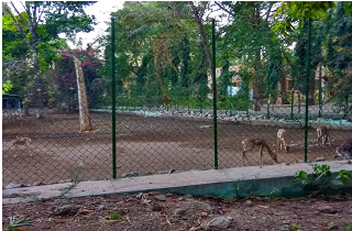 Mahatma Gandhi National Zoo, Solapur